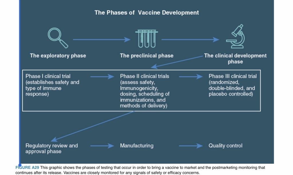 Phases of vaccine development - Let's Talk Vaccines