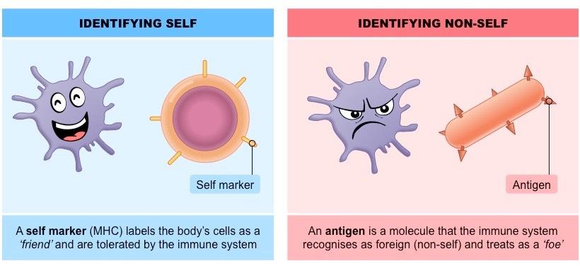 Recognizing self vs non-self