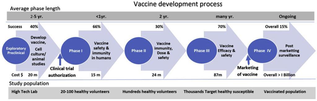 Phases of vaccine development